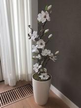Magnolia boom  140 cm.