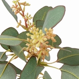 Eucalyptus tak 65 cm