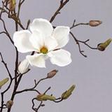 Magnolia 107 cm