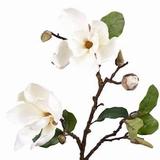 Magnoliatak 72 cm.