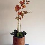 Vaas van leer inclusief Phalaenopsis